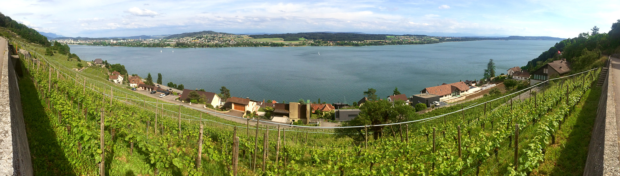 Rebstock-Panorama oberhalb von Tüscherz