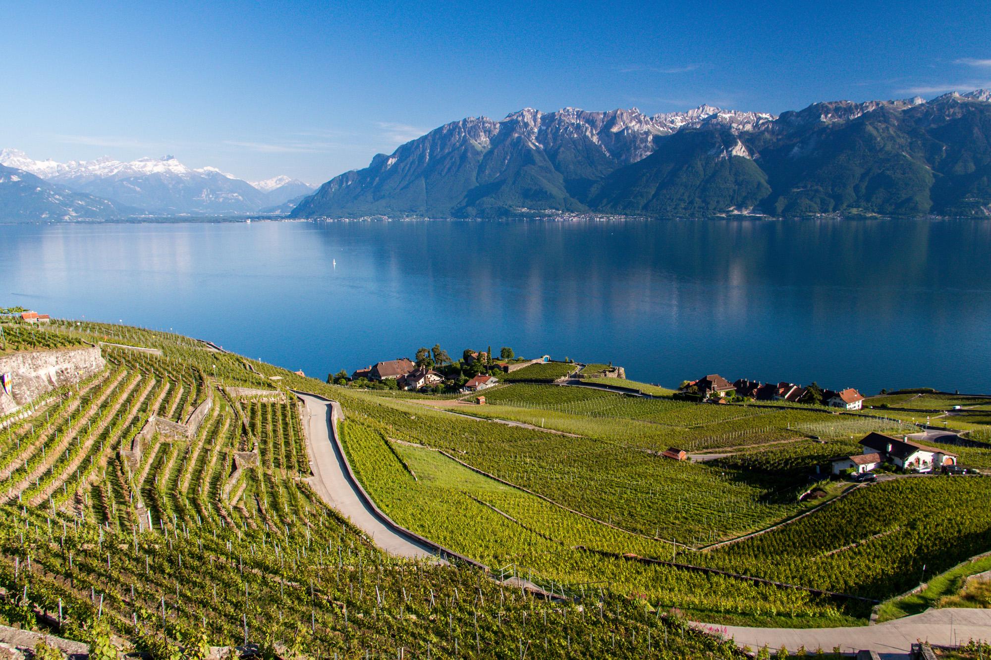 Blick von Chexbres auf die Weinberge des Lavaux am Genfersee