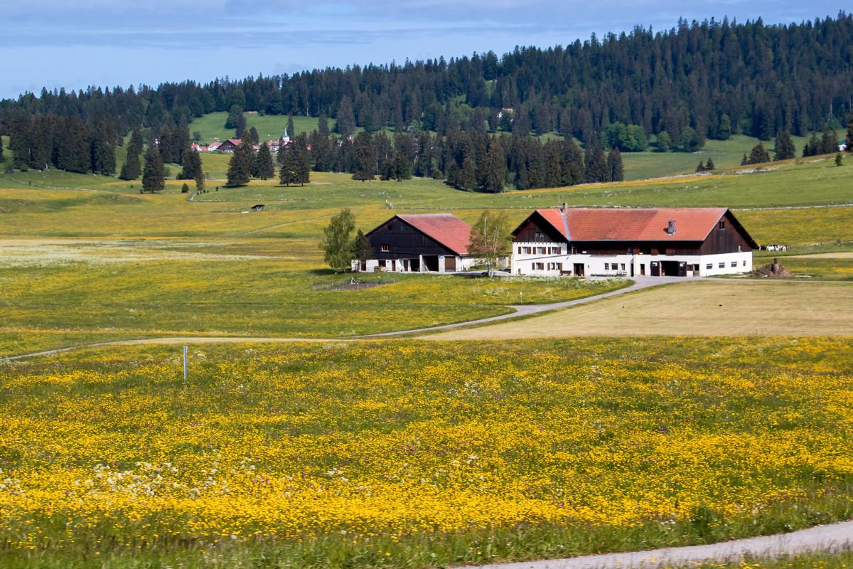 Ein typisches Bauernhaus des Hochjuras: die Mauern aus Jurakalk, und der Grundriss langgezogen, um gleich auch noch Stall und Scheine unter demselben Dach zu beherbergen