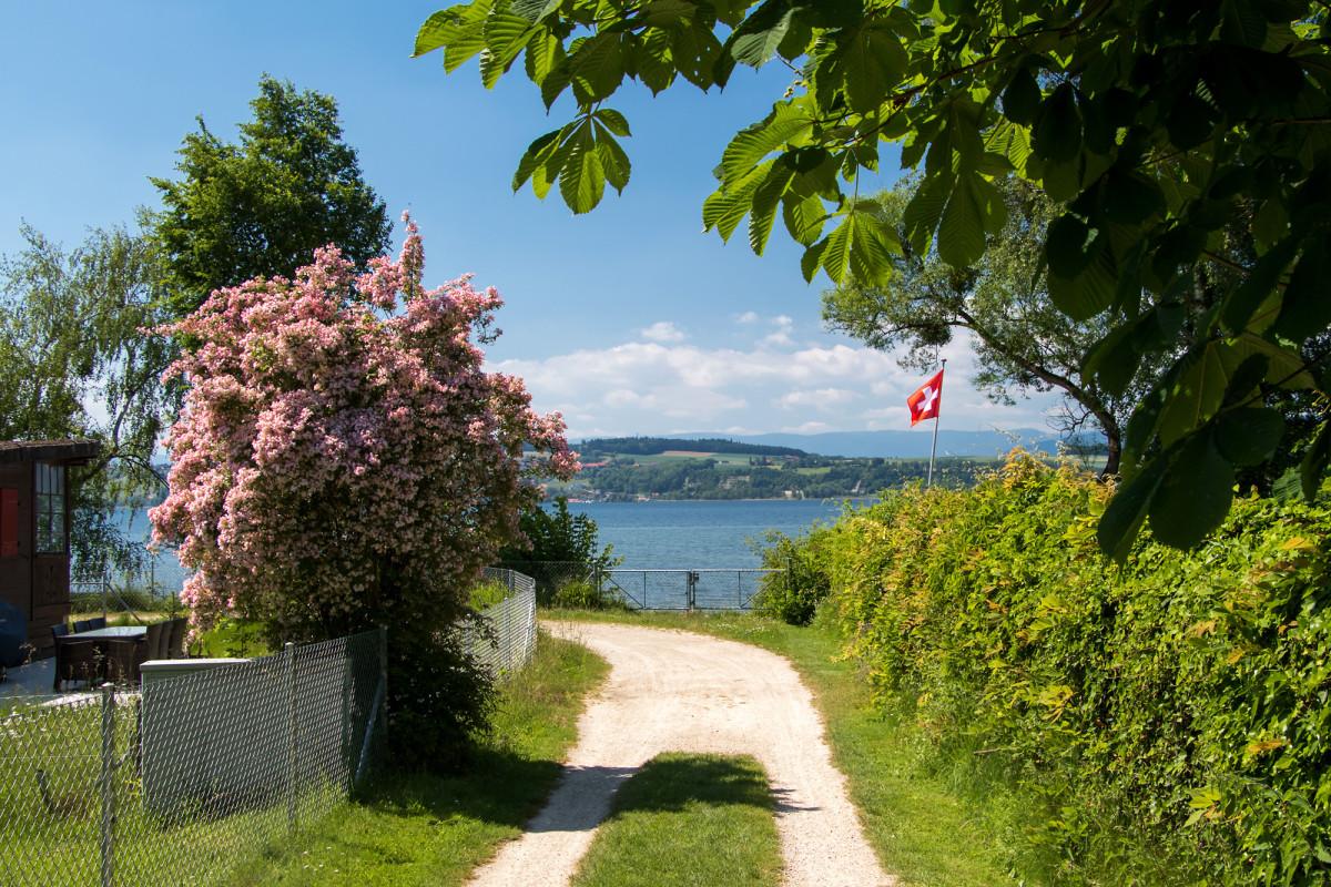 Am Ufer des Murtensees geht mein Weg nach Avenches...