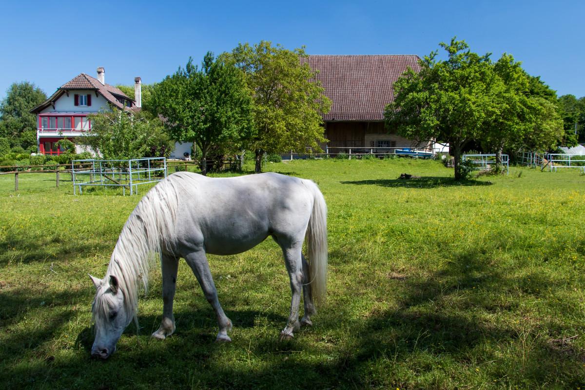 Tierische Begleitung auf dem Weg nach Avenches :-)
