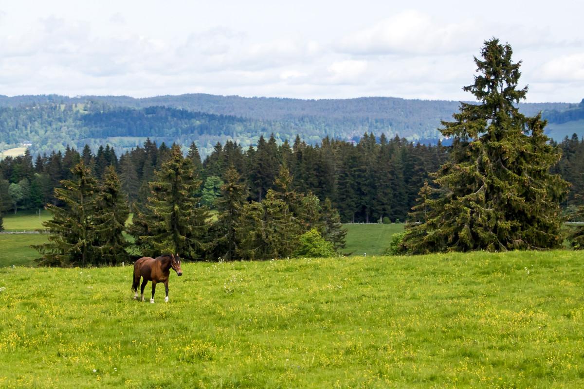 Ein letzter Gruss des Jura - endlich ein freies Pferd! :-)