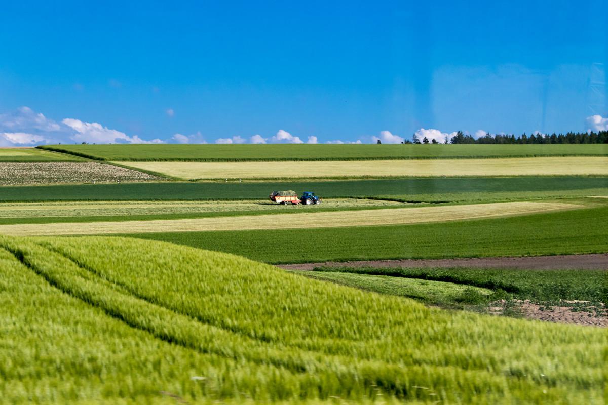 Die waadtländische Kornkammer