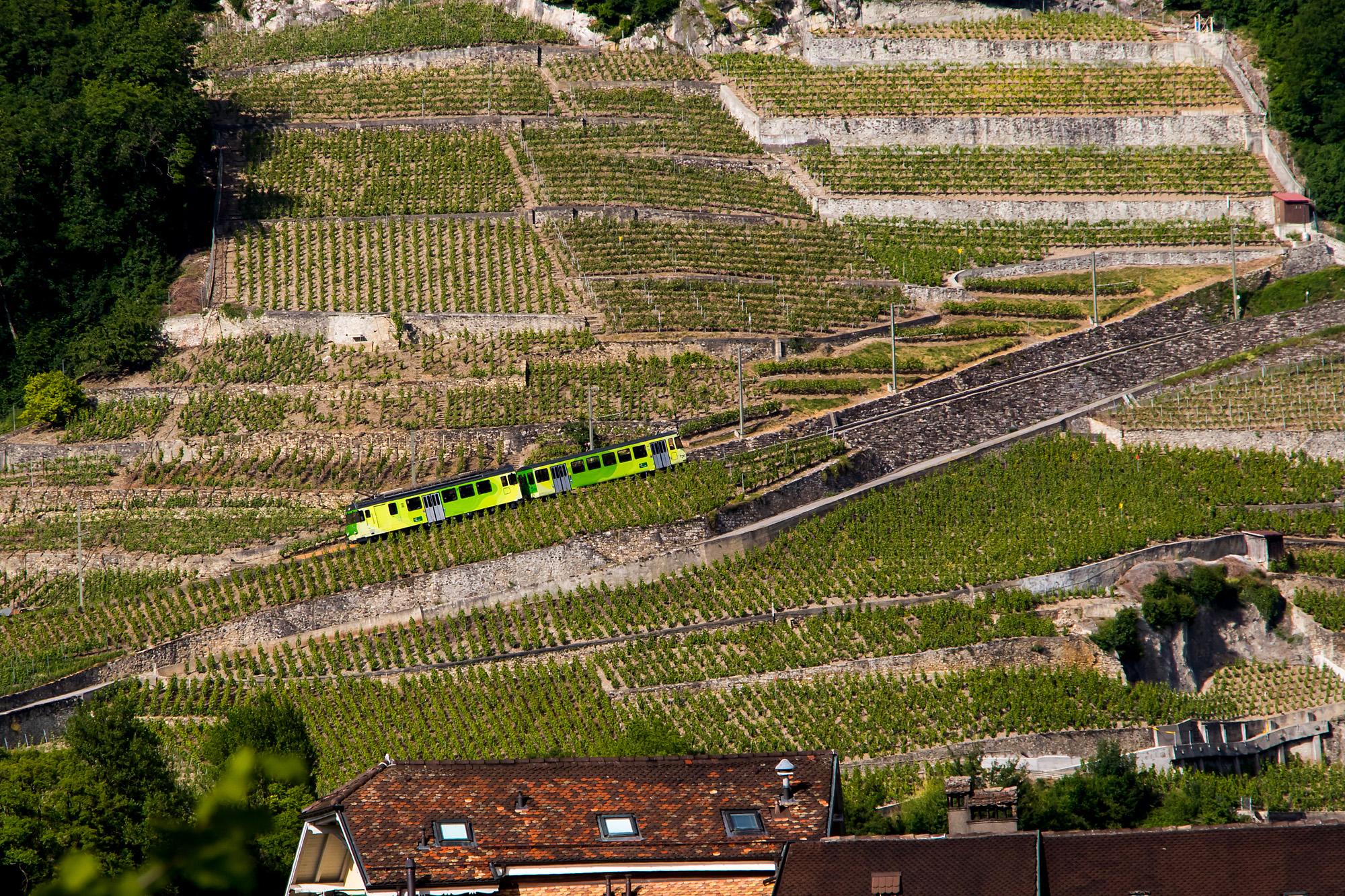Die Zahnradbahn Aigle - Leysin müht sich sehenswert die Weinberge empor