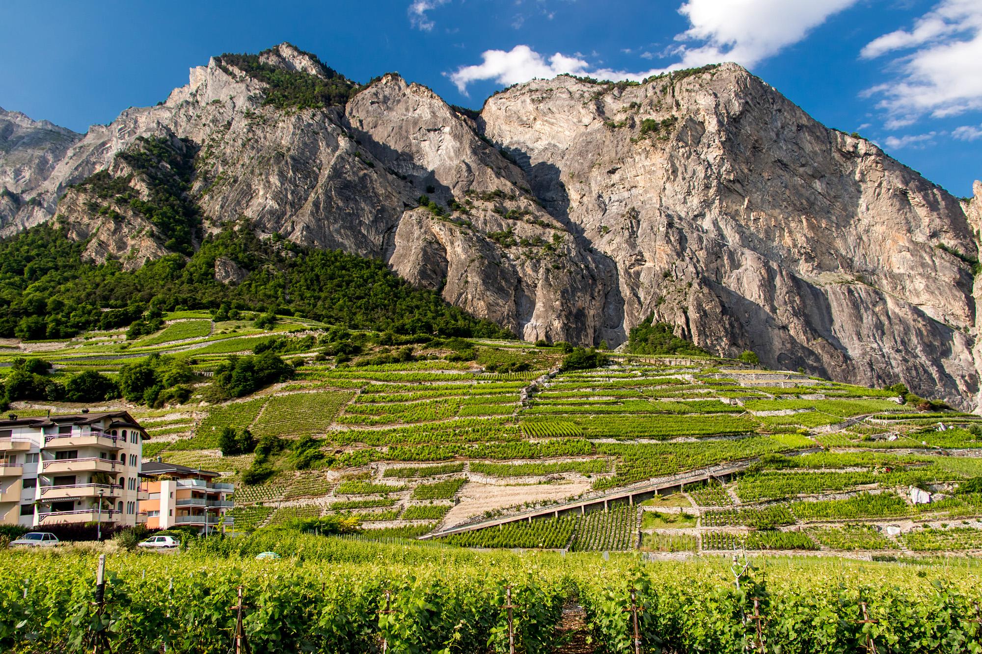 Prächtige Wein-Berge bei Chamoson, VS
