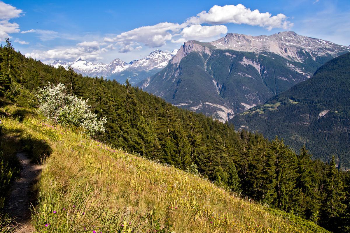 Aussichtsreiche alpine Wiesen-Wanderung